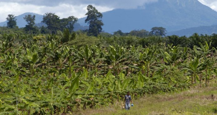 Biofuel Boom in Colombia